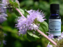 penneyroyal essential oil